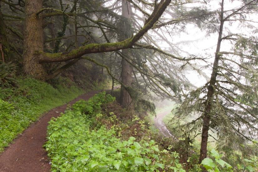 Purisima_Creek_Redwoods21