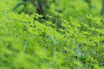 greenest-of-green