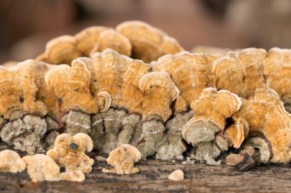 wunderlich-fungus04