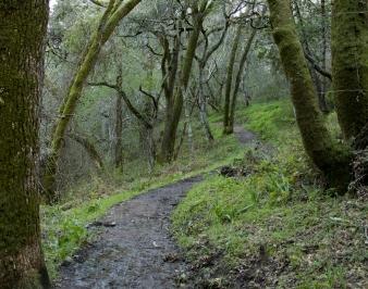 022417muddy-trail