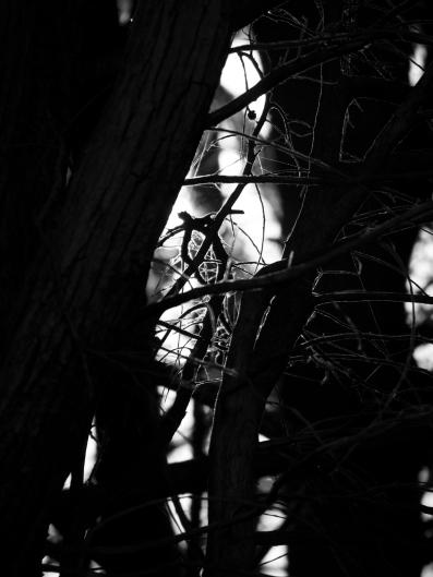 101517backlit branches