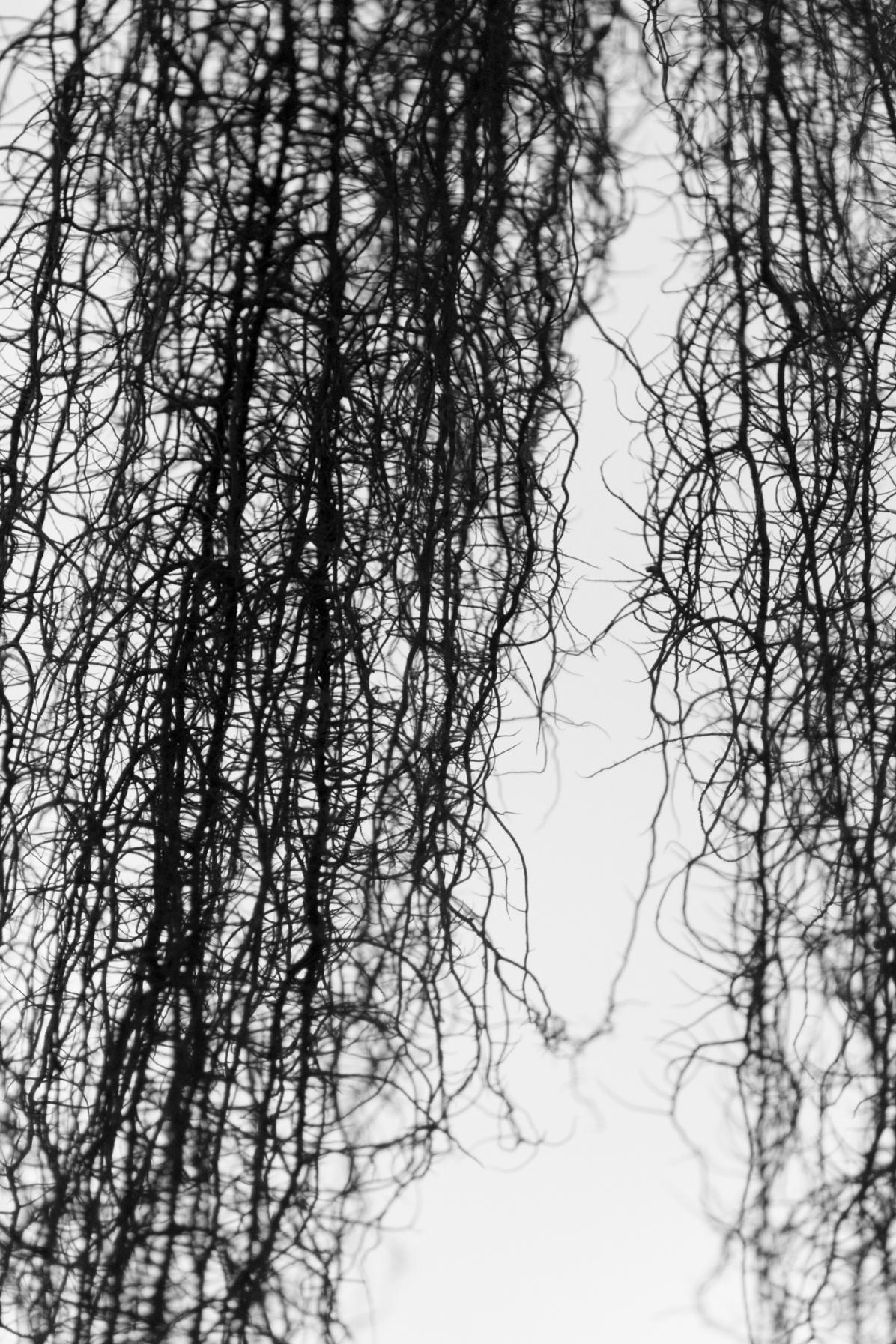 102217bw-hanging moss-bw