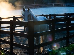 wunderlich morning horse