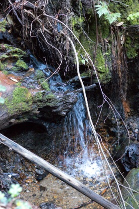 Waterfall Made of Fallen Tree