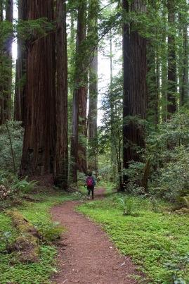 Humboldt Small Person Big Tree